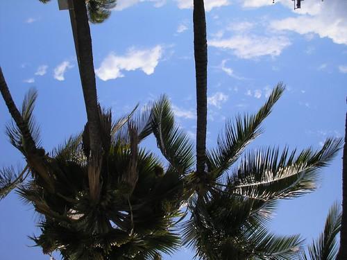 Maui 001