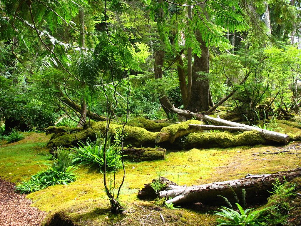 moss garden 5