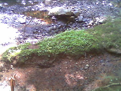 some green in the midst of an empty river bed