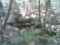 rocks, trees
