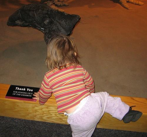 dino museum2