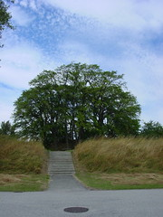 steps to mound