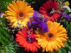 Bodega Fleurs
