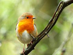 Bird series [Explored] photo by Jonny_Kerr.