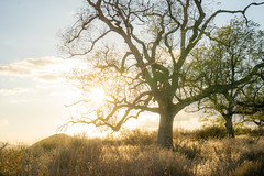 Sun Behind a Tree photo by Stephen Hennessey