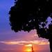 Árvore da praia -l'arbre de la plage- Strand-Baum - Beach Tree