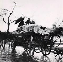 1- Janvier 45 Royan -Les campagnards évacuent la zone des avant postes - Fonds Amiel