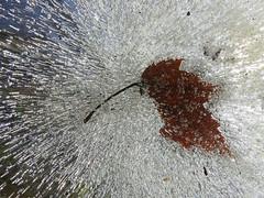 Leaf ice explosion photo by javadoug