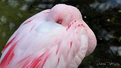 Flamingo. photo by Sabrina Martins photographie.