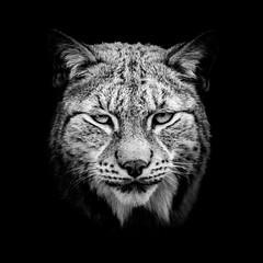 The Lynx in black photo by Tommy Høyland