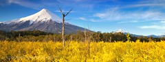 Retamos y Volcan Osorno - Parq. Nac. Vicente Perez Rosales (Patagonia - Chile) photo by Noelegroj (5 Million views.Thank you all!!)