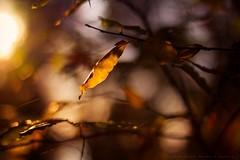 Autumn photo by icemanphotos
