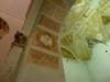 15736980997_19f6e8a4b3_t