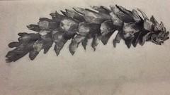 Pinecone drawing photo by mossmadeleine