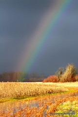 Oregon Rainbow photo by Gary Grossman