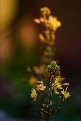 Leaning Bokeh Tower (Explore) photo by tormod_l