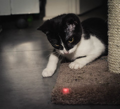 The Red Dot photo by Yewbert The Omnipotent