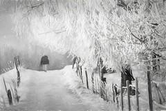 Walking in winter HFF photo by BirgittaSjostedt