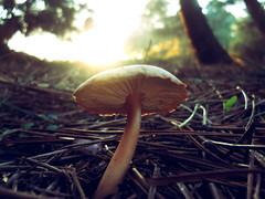 Sunset mushroom photo by Bkutlak H.D