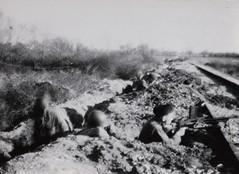 8 - Avril 45- Le BM 2 devant Royan-  ss lieutenant Simon Gros aux avant postes - Fonds Amiel