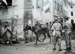 Masevaux- mulets rue de lattre nov 1944 photo DR origine Thierry Frey - Copyright Antoine Ehret