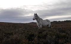 winter fades to grey photo by romorga