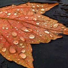 Autumn Rain photo by tim.perdue