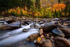Autumn Rush photo by Dan Mihai