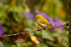 bird photo by udithawix