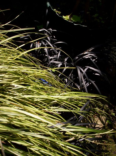 grasses 25-05-06 2