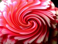 Fleur spiral !!!