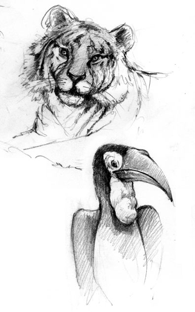 tigers_toucan