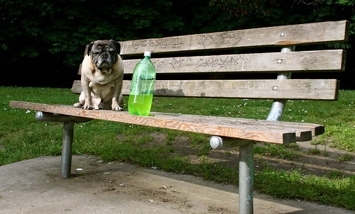 Pug and Half-Empty Labeless Bottle
