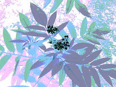 external image 171538086_db78530ce3_m.jpg