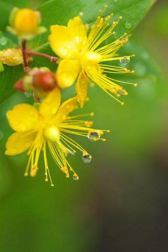 My garden's yellow