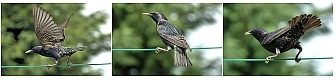 Bird pics, by Dave M with a Nikon D70 + Nikkor 18-200 lens