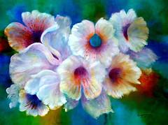 Jardin secreto en violetas de lilia