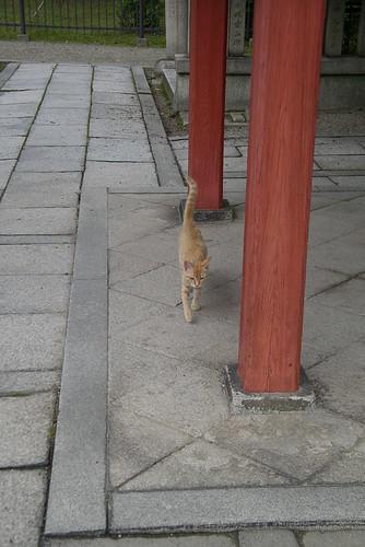 猫と石畳と赤い柱