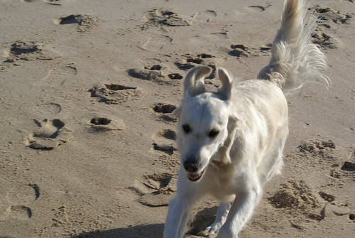 Frisket, Indian Wells Beach, Amagansett, NY (August 13, 2006)