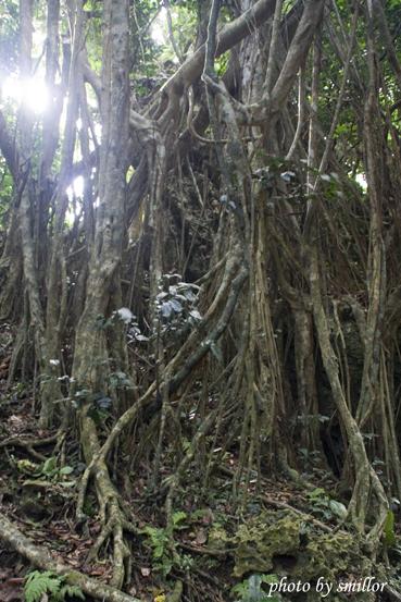 垂榕谷可能是因垂榕氣根攀附礁岩且深藏山谷而取名吧 ?!