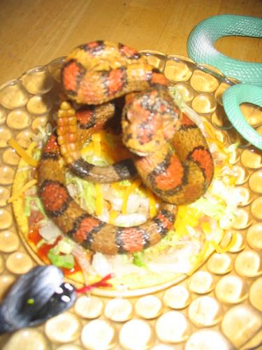 Snakes on a Tostada