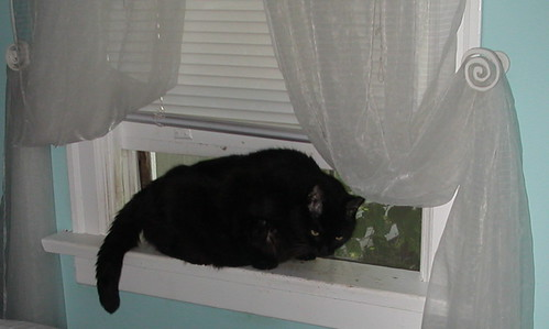 Vuvuc the Cat