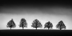 Five trees photo by Turnvater Janosch