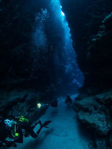 ΩCEANS - Pointe aux Cachalots