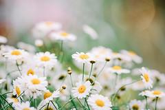 Flowers Bloom photo by Gabriela Tulian