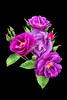 27659892511_9e3ec89ae4_t