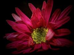 Un coeur en or photo by domiloui