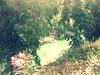 16729003859_fcdf97cbb6_t