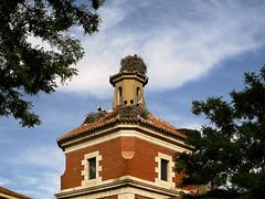 las cigueñas de la Iglesia de San Marcos photo by jacilluch