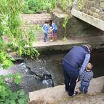 Spotting Trolls under the bridge<br/>25 May 2015